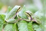frogsunited3