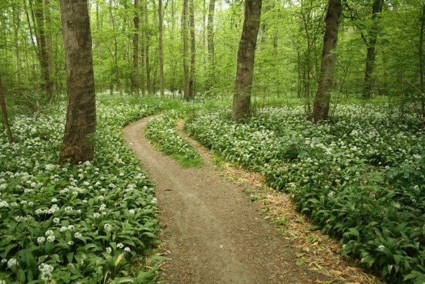 Naturschutz und kunst leipziger auwald e v seite 2 for Auenwald leipzig