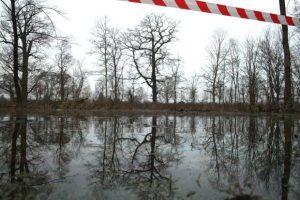 Auwaldvernässungsprojekt. Foto: Ralf Julke
