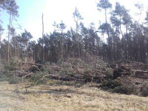 Flächiger Windbruch in der Dübener Heide