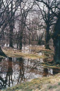 Durch Flussdynamik gestaltete Aue bei Dessau 1999