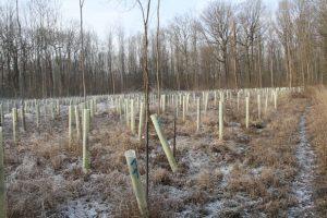 """Naturferne Aufforstung mit viel Plastik im FFH-Gebiet """"Leipziger Auwald"""" Januar 2019"""