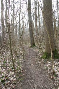 Illegaler Mountainbike-Trail