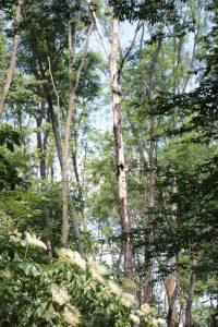 Abgängige Bäume