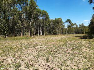 Wald im Klima- und Forststress: Eichholz bei Zwenkau