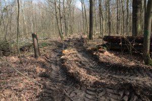 Holzeinschlag Oberholz