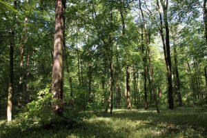 Leipziger Auwald im Sommer 2020