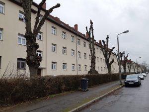 Straßenbäume in Leipzig