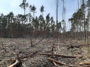 Noitzscher Heide im April 2021