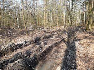 Rückegasse Oberholz