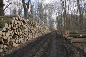 Holzpolter im Leipziger Auwald